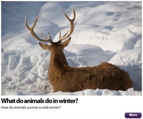 What do animals do in winter Over 11s